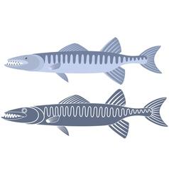 Barracuda vector