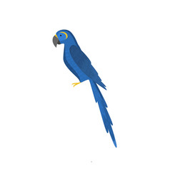Blue macau parrot isolated on white background vector