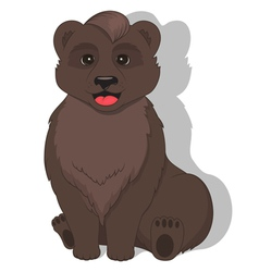 sitting bear on white background vector image