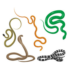 slither snakes top view icons set vector image