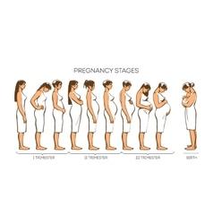 Women Pregnancy Stages vector