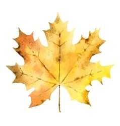 Autumn maple leaf isolated on white background vector image