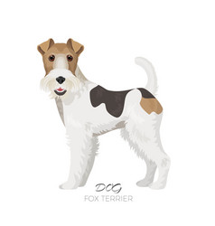 fox terrier isolated on white backdrop purebred vector image