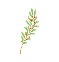ilex decidua meadow holly possumhaw branch vector image