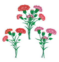 Red carnation or clove flower spring bouquet vector