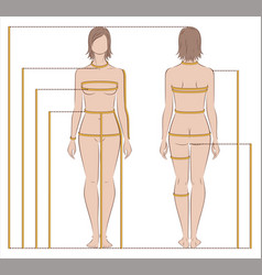 womens body measurements vector image