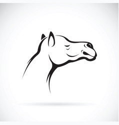 Camel head on white background wild animals vector