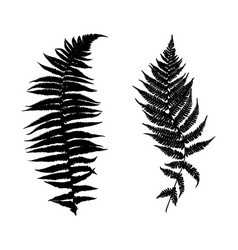 different ferns vector image