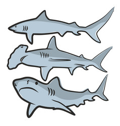 Drawing of big sharks vector