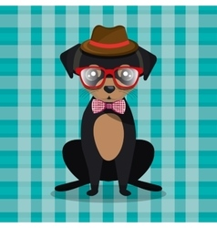 Fashion dog puppy sit hat glasses bow checkered vector