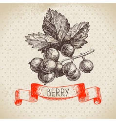 Red currants Hand drawn sketch berry vintage vector