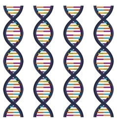 sequence DNA with bases in color vector image