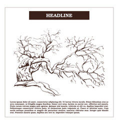 Vintage engraving tree isolated vector