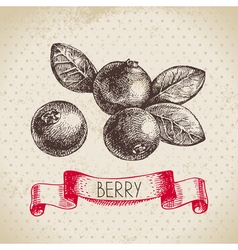 Cranberry Hand drawn sketch berry vintage vector image