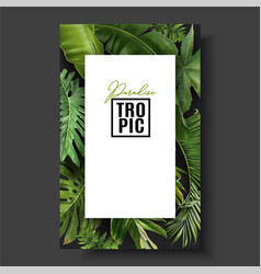 Frame banner with green tropical leaves vector