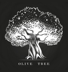 hand drawn old olive tree on chalkboard vector image