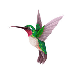 Hummingbirds isolated trendy print vector