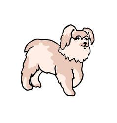 little dog vector image