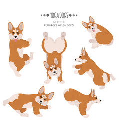 Yoga dogs poses and exercises welsh corgi vector