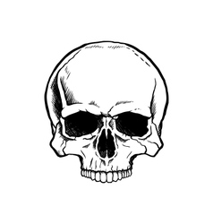 Black and white human skull vector image