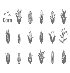 Corn icons vector image