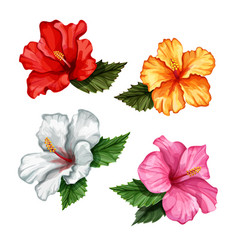 Realistic hibiscus flower leaves set vector