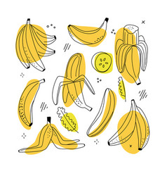 set banana linear icons on white background vector image