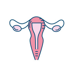 uterus fallopian tubes anatomy female vector image
