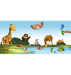 Wild animals living by the pond vector