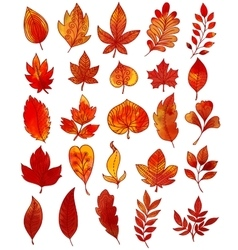 Autumn Foliage Hand Drawn Collection vector image vector image
