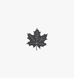 Autumn maple leaf icon isolated on white vector