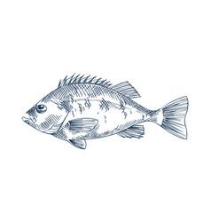 Bass seafood monochrome vector