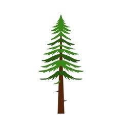 Canadian fir icon flat style vector image