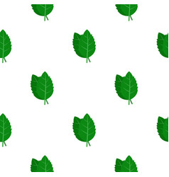 Fresh green basil leaves pattern flat vector
