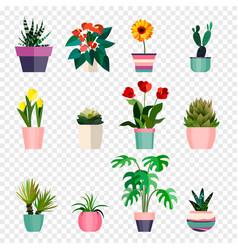 set green house plants in pots outdoor vector image