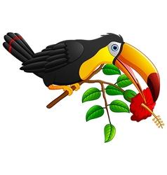 Funny toucan bird cartoon vector image
