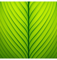 Texture of a green leaf vector image vector image