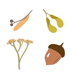 autumn seeds vector image