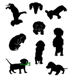 dachshund-6 vector image