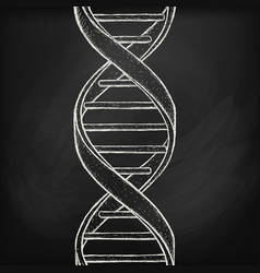 Dna helix symbol on chalk board background vector
