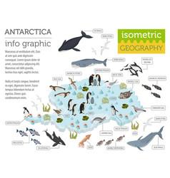 Isometric 3d antarctica flora and fauna map vector