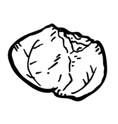cabbage doodle vector image vector image