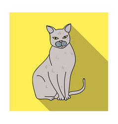 chartreux icon in flat style isolated on white vector image