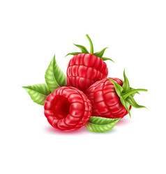 realistic raspberry juicy fruit with leaves vector image