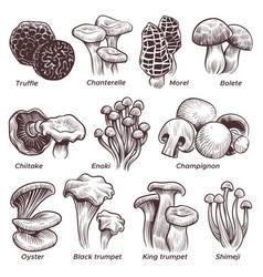 Sketch mushrooms hand drawn various mushroom vector
