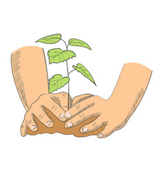 Hands planting young tree vector