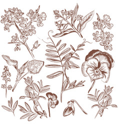 set of hand drawn plants leafs and flowers vector image