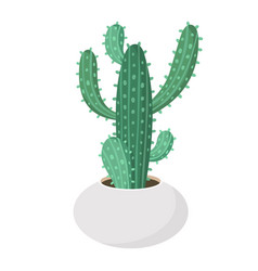 Cactus and succulent in pot domestic colorful vector