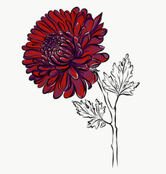 Lovely isolated big red flower grafical paint vector