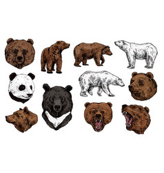 polar brown bear grizzly and panda sketch vector image